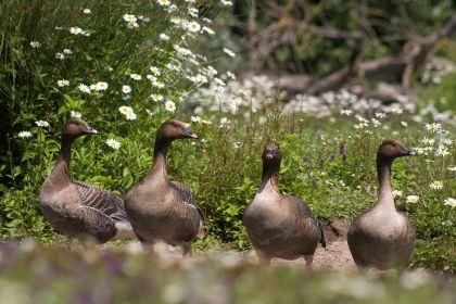 slimbridge-wetland-centre-cotswolds-concierge (11)