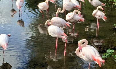 birdland-bourton-cotswolds-concierge (10)