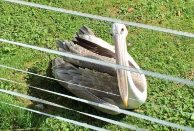 birdland-bourton-cotswolds-concierge (11)