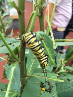 stratford-butterfly-farm-cotswolds-concierge-13