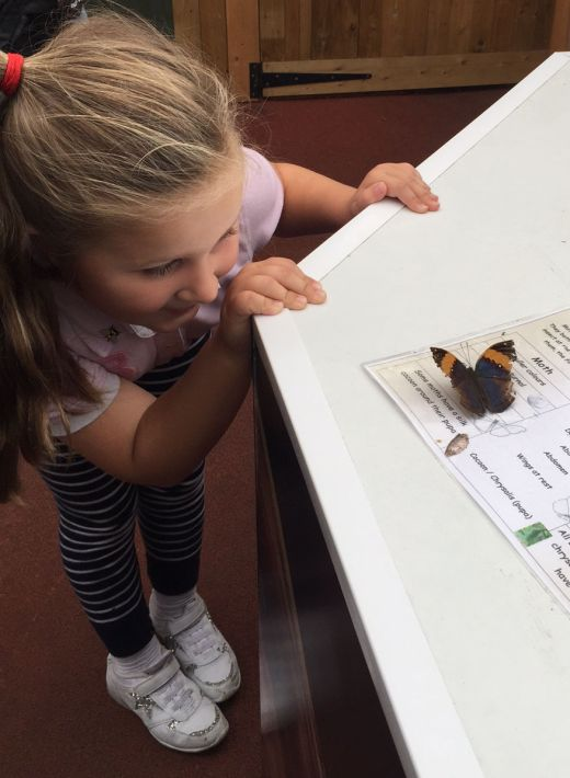 stratford-butterfly-farm-cotswolds-concierge-14