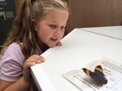 stratford-butterfly-farm-cotswolds-concierge-15