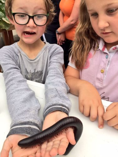 stratford-butterfly-farm-cotswolds-concierge-25