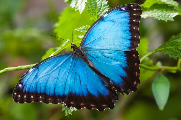 stratford-butterfly-farm-cotswolds-concierge-28