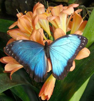 stratford-butterfly-farm-cotswolds-concierge-29