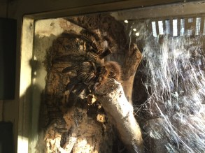 stratford-butterfly-farm-cotswolds-concierge-9