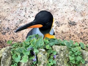 birdland-bourton-on-the-water-cotswolds-concierge (27)