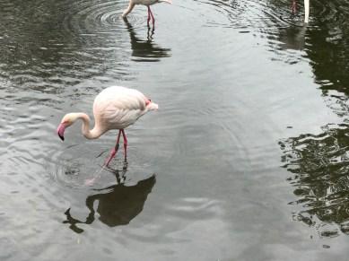 birdland-bourton-on-the-water-cotswolds-concierge (8)