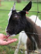 cotswold-farm-park-cotswolds-concierge-summer (11)