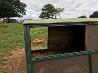 cotswold-farm-park-cotswolds-concierge-summer (14)