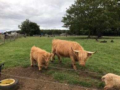 cotswold-farm-park-cotswolds-concierge-summer (16)