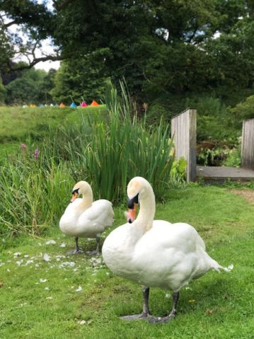 cowley-manor-kids-summer-cotswolds-concierge (33)