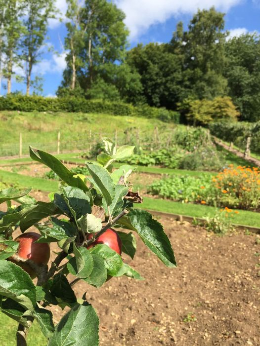 painswick-rococo-garden-summer-cotswolds-concierge (49)