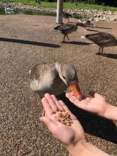 slimbridge-wetlands-centre-cotswolds-concierge (20)