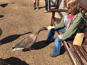 slimbridge-wetlands-centre-cotswolds-concierge (21)