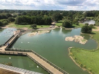 slimbridge-wetlands-centre-cotswolds-concierge (60)