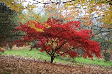 batsford-arboretum-cotswolds-concierge (3)