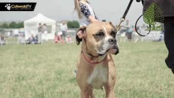 Dog Show with Cotswolds Dogs & Cats Home