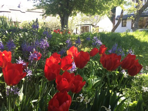 The spring gardens hues