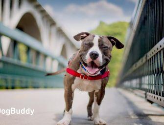 Dogbuddy – l'Airbnb pour faire garder son chien