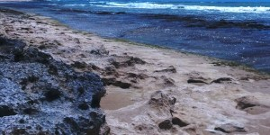 oneula, beach, clean, up, ewa, may, 2014