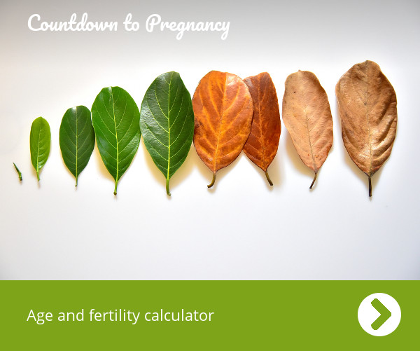 Ovulation Calculator And Conception
