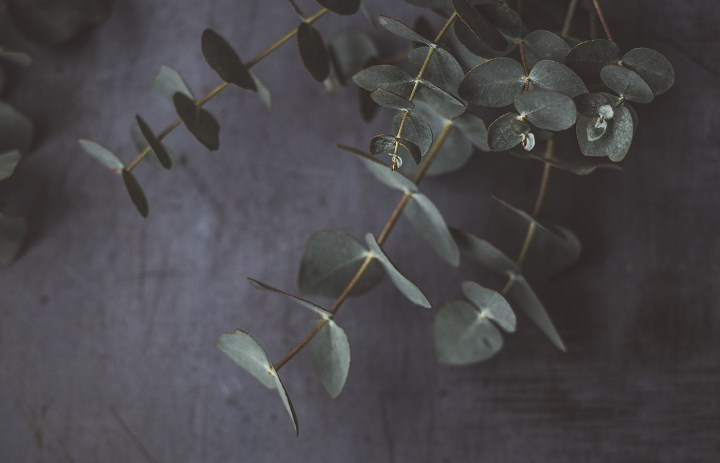 Bimët medicinale
