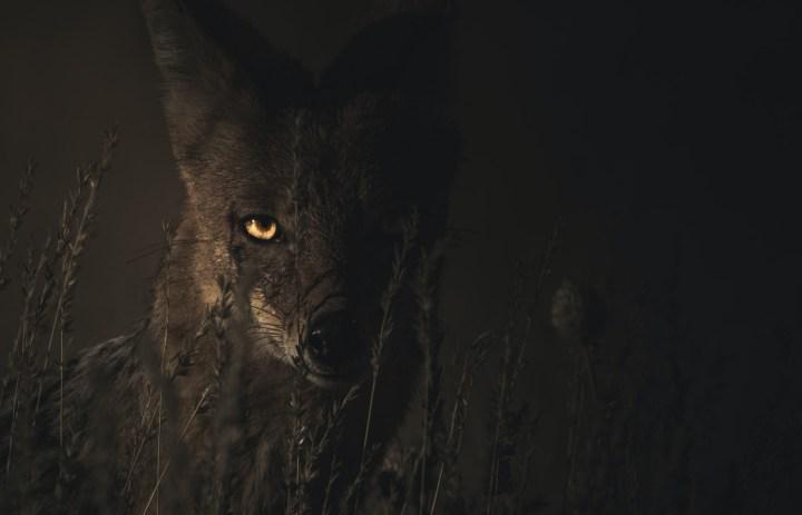 Luz de Maria - Awọn Wolves ni Ebi npa