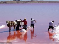 Salt And Trade At The Pink Lake: Community Subsistence In Senegal