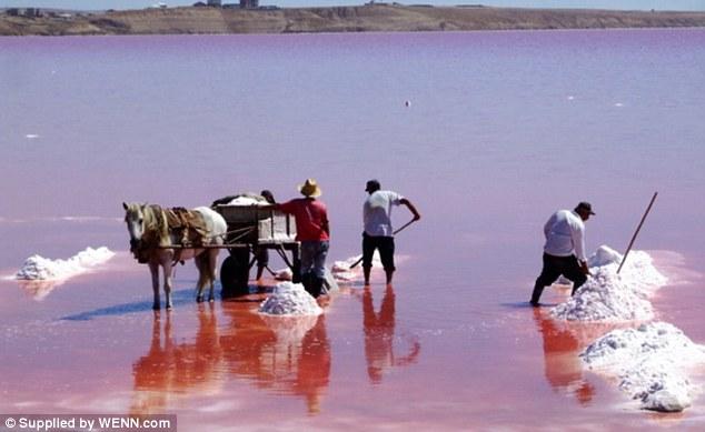 pink-lake