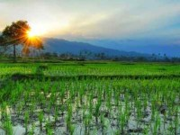 The System Of Rice Intensification And Its International Community Of Practice