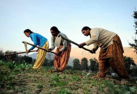 Women farmers at work in their vegetable plots near Kullu town, Himachal Pradesh, India.  Pic by Neil Palmer (CIAT).
