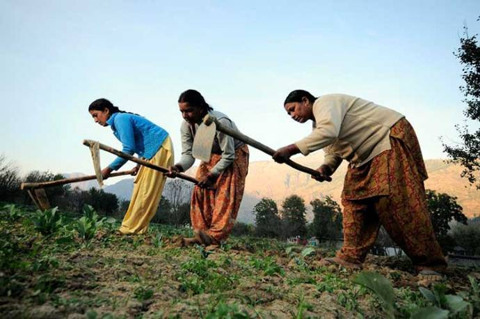 Women farmers at work in their vegetable plots near Kullu town, Himachal Pradesh, India.  Pic by Neil Palmer (CIAT).