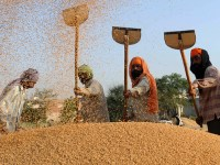 Double Whammy On Farmers: On Top Of Demonetisation India Scraps Wheat Import Duties!