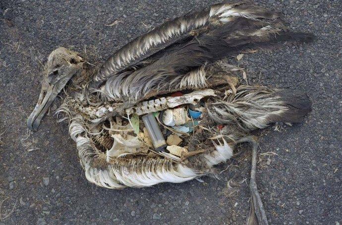 waste-bird