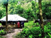 Adivasis Integral To Protecting The Forest