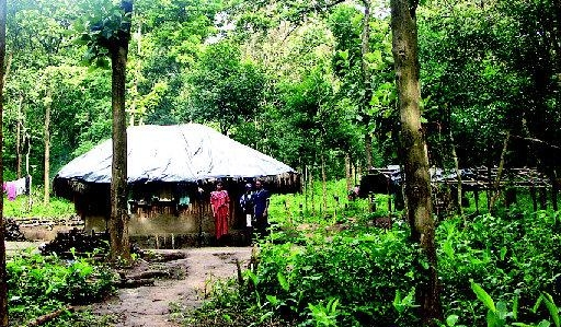 adivasi-house