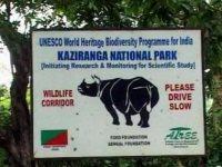 Human Rights Violations in Kaziranga National Park