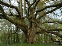 Lafzon ka Perh (The Tree of Words)