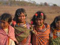 Declare Adivasis as Indigenous People Of India