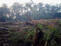 Environmental Protest: Bob Brown Wins In Australia