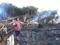 Borneo: Island Devastated, People Oblivious