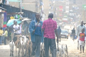 ready to kill in Matare slum in Nairobi
