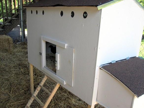Suburban chicken coop