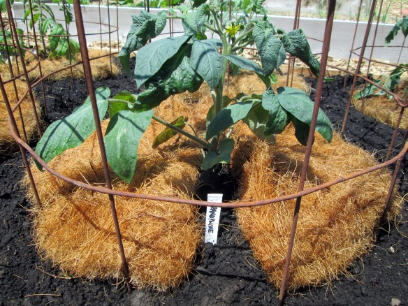 recycling a coconut husk planter liner