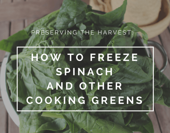 Preserving the Harvest: How to freeze spinach and other cooking greens