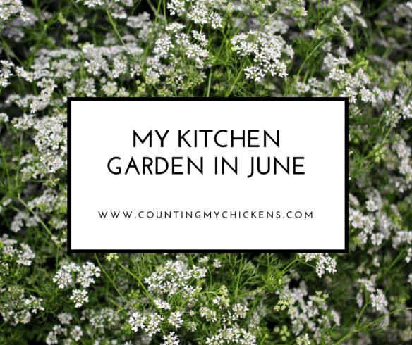 My kitchen garden in June