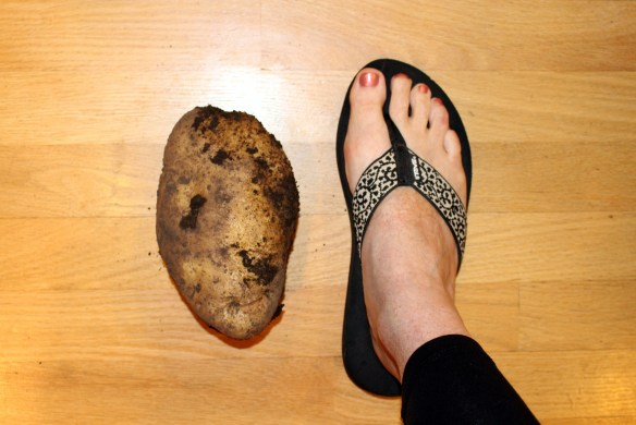 Large potato