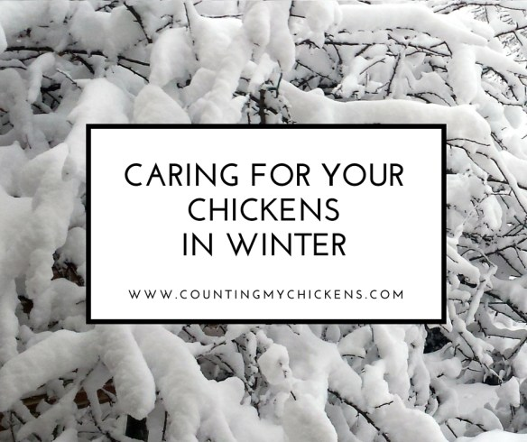 Caring for Your Chickens in Winter