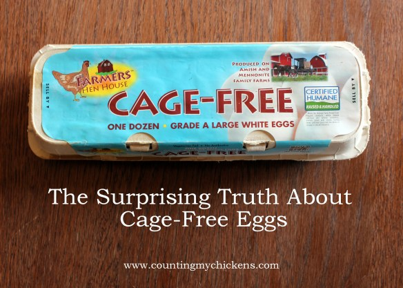 The surprising truth about cage free eggs